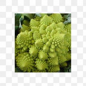 Broccoli - Romanesco Broccoli Cauliflower Vegetable Broccoflower PNG