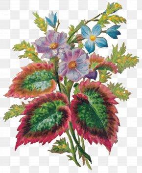 Illustration - Cut Flowers Floral Design Floristry Flower Bouquet PNG