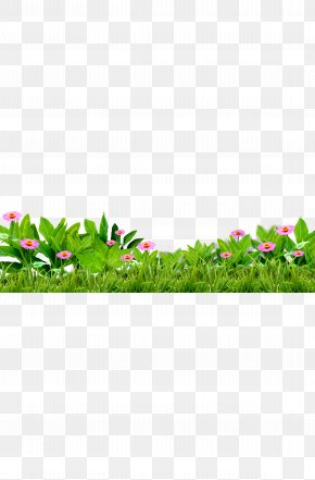 Grass, Flowers, Green, Flower - Download PNG