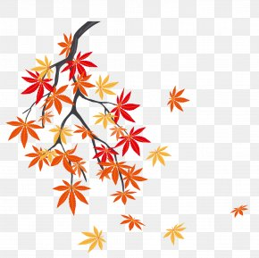The Falling Leaves On A Maple Tree - Autumn Leaf Color Maple Leaf PNG
