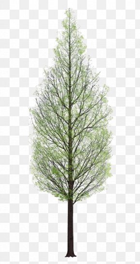 Plant - Tree 3D Rendering PNG