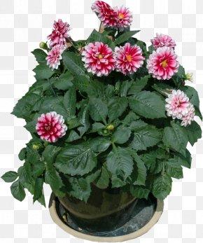 Pot Plant - Flowerpot Garden Furniture Houseplant PNG