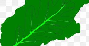 Leaf - Leaf Greens Plant Stem Font Tree PNG