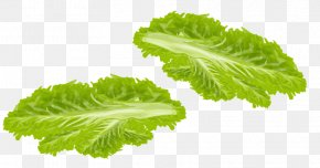 Vegetables - Spring Greens Lettuce Vegetable Food PNG
