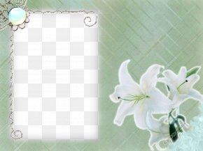 White Flower Frame Transparent - Flower PNG