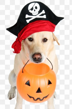 Halloween Pirate Dog - The Dog Who Saved Halloween Bad Pets: True Tales Of Misbehaving Animals Bad Pets Save Christmas! PNG