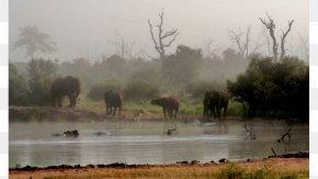 Zuidkennemerland National Park - Hlane Royal National Park Nature Reserve Wildlife PNG