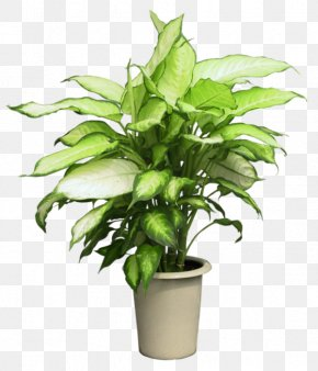 Magnolia - Syngonium Podophyllum Houseplant Flowerpot PNG