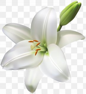 Lily Flower Transparent Clip Art Image - Industry Service Floristry Product Manufacturing PNG