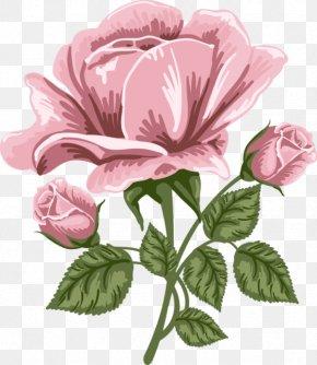 Pink Rose Art Picture - Rose Pink Clip Art PNG