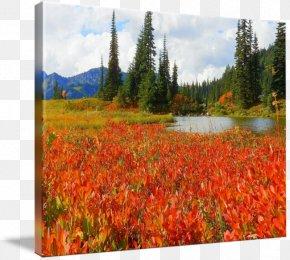 Painting - Mount Scenery National Park Landscape Painting Ecoregion PNG