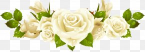 White Background Mothers Day White Rose - Wedding Invitation Stock Photography Vector Graphics Clip Art Ring PNG