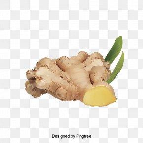 Perennial Plant Curcuma - Vegetables Cartoon PNG