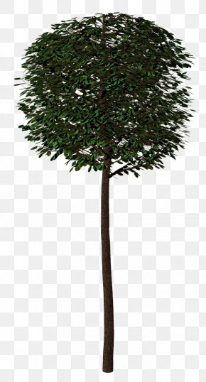 Tree - Branch Shrub Tree Arecaceae Plant PNG