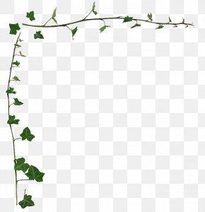 Leaf Border - Common Ivy Vine Desktop Wallpaper Stock Photography Clip Art PNG