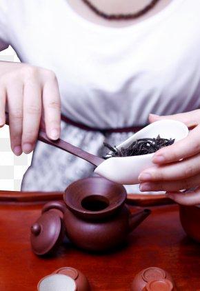 Tea Tea Artist - Tea Tieguanyin Da Hong Pao Kuding Junshan Yinzhen PNG