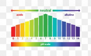 Healing Fibroids A Doctor's Guide To A Natural Cur - Diagram PH Universal Indicator Alkaline Diet Acid PNG