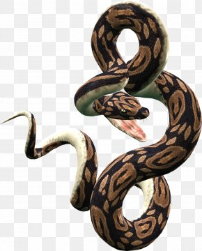 Snake Image Picture Download - Snake Lizard Reptile PNG