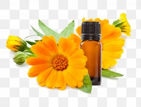 Flower - Calendula Officinalis Flower Skin Care Marigold Calendula Ointment PNG