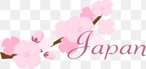 Cherry Blossom Desktop Wallpaper - National Cherry Blossom Festival Flower PNG
