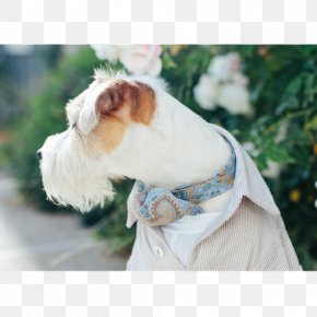 Dog Wearing Tie - Dog Breed Shih Tzu Companion Dog Dog Clothes PNG
