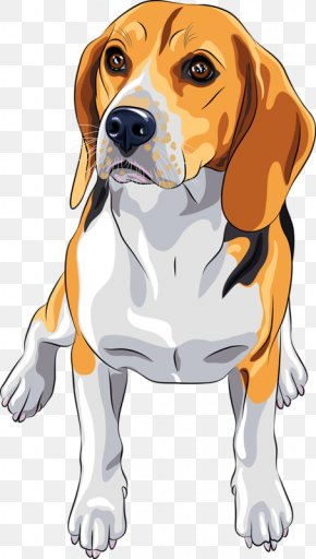 Dog - Beagle Jack Russell Terrier Dog Breed PNG