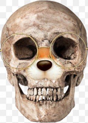 Skull - Human Skull Human Skeleton Human Anatomy Homo Sapiens PNG