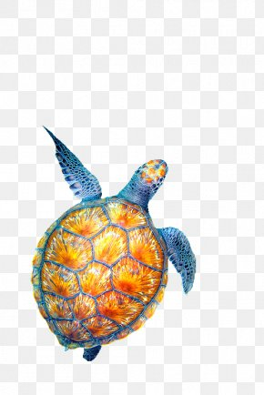 Creatures - Sea Turtle Drawing PNG