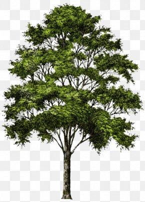 Tree - Tree Desktop Wallpaper Clip Art PNG