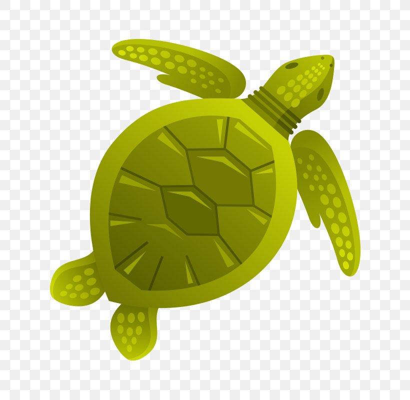 Turtle Aquatic Animal Sea Clip Art, PNG, 800x800px, Turtle, Animal, Aquatic Animal, Deep Sea Creature, Dolphin Download Free