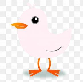 Blush - Bird Domestic Canary Clip Art PNG
