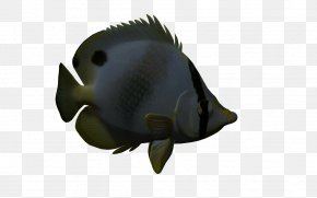 3d Cartoon Animals Marine Animals - 3D Computer Graphics Animal Drawing PNG
