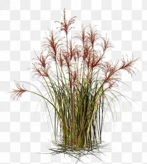 Grass - Grasses Straw Material PNG