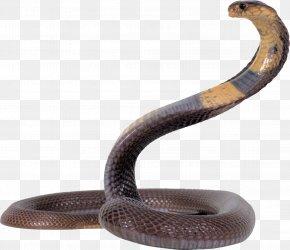 Snake - King Cobra Snake Clip Art PNG