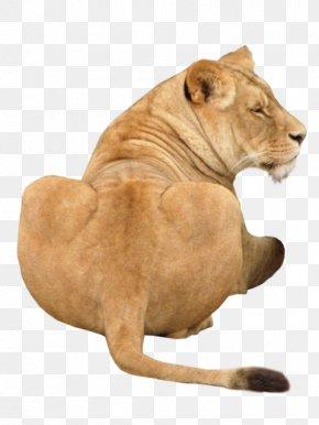 Lion - Lion Dog Big Cat PNG
