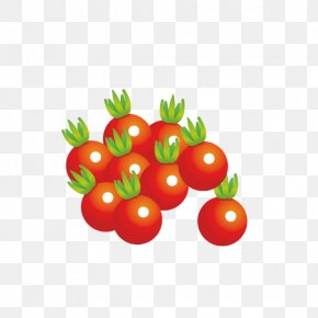 Fresh Tomatoes - Juice Cherry Tomato Vegetarian Cuisine Vegetable Fruit PNG