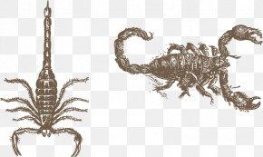 Vector Painted A Scorpion - Scorpion Euclidean Vector Vecteur PNG