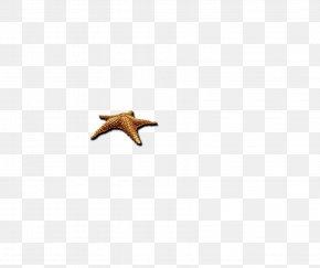 Starfish - Beak Computer Pattern PNG