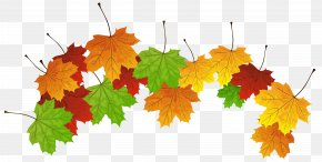 Fall Leaves Clipart Image - Autumn Leaf Color PNG