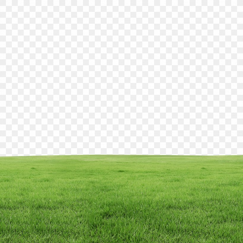 Lawn, PNG, 2953x2953px, Grass, Daytime, Eleusine Indica, Field, Google Images Download Free