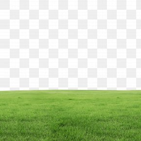 Grass - Lawn PNG