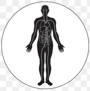Human Body - Human Body Human Skeleton Circulatory System Homo Sapiens PNG