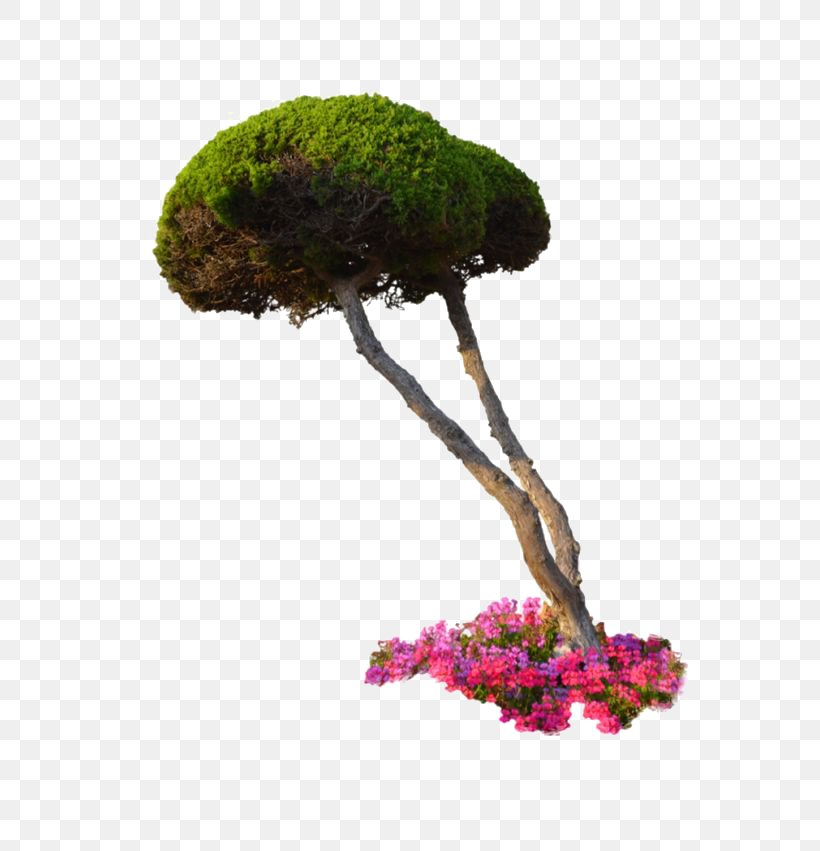 Plant Flower Tree Shrub, PNG, 564x851px, 3d Rendering, Plant, Architectural Rendering, Bonsai, Digital Image Download Free