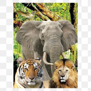 Animal Family - Jigsaw Puzzles Three-dimensional Space Indian Elephant Ravensburger Mechanical Puzzles PNG