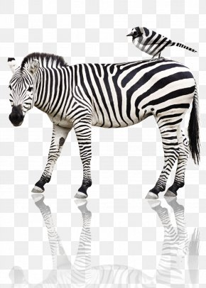 Zebra - Quagga Tiger Horse Bird Animal PNG