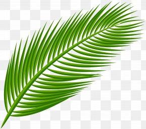 Palm Leaf Transparent Clip Art Image - Arecaceae Leaf Clip Art PNG
