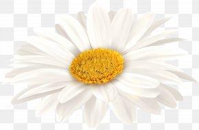White Gerbera Clip Art Image - Oxeye Daisy Transvaal Daisy Chrysanthemum Floristry Petal PNG