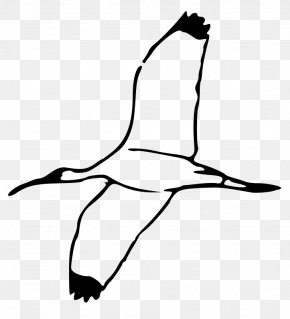 Birds Flying Clipart - Ibis Clip Art PNG