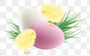 Transparent Easter Chickens Eggs And Grass Clipart Picture - Chicken Red Easter Egg Clip Art PNG