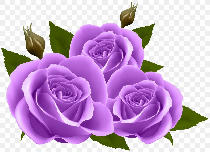 Flower Rose Wallpaper Png 8000x5803px Rose Blue Rose Cut Flowers Floral Design Floristry Download Free
